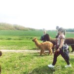 alpaca natuurwandeling zeeland